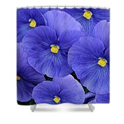 Pansy Profusion Shower Curtain