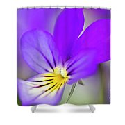 Pansy Violet Shower Curtain