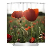Papaver Rhoeas Shower Curtain