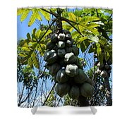 Papayas On A Tree Shower Curtain
