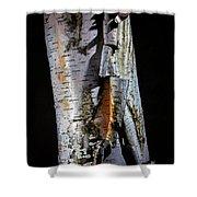 Paper Birch Shower Curtain