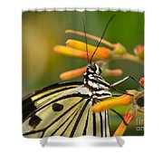 Paper Kite Butterfly With Orange Flower Shower Curtain