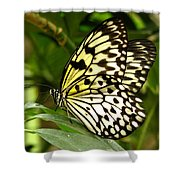 Paper Kite Shower Curtain