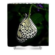 Paperwhite Butterfly Shower Curtain