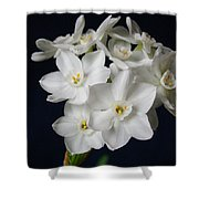 Paperwhites Shower Curtain