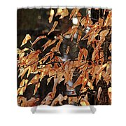 Papery Beech Leaves Shower Curtain