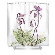 Paphiopedilium Percy Shower Curtain