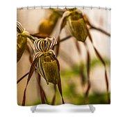 Paphiopedilum Shower Curtain