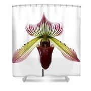 Paphiopedilum Lawrenceanum Shower Curtain