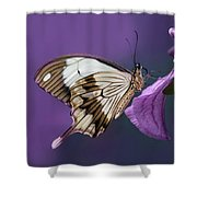 Papilio Dardanus On Violet Flowers Shower Curtain