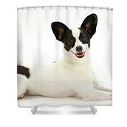 Papillon X Jack Russell Terrier Dog Shower Curtain