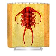Paraceraurus Fossil Trilobite Shower Curtain