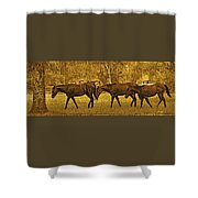 Parade In The Shade On A Hot Afternoon Shower Curtain