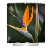 Paradise Song Shower Curtain