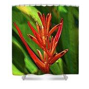 Parakeet Flower Exotic Shower Curtain
