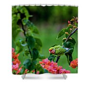 Parakeet South Maui Shower Curtain