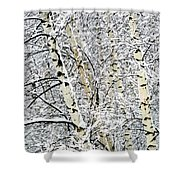 Parallel Beauties Shower Curtain