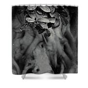 Parallel Botany #5175 Shower Curtain