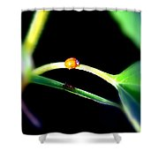 Parallel Paths Shower Curtain