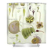 Parasites And Insectivorous Plants Shower Curtain