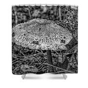 Parasol Mushroom #h2 Shower Curtain