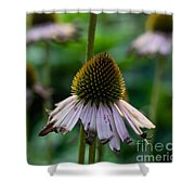 Parched Purple Petals Shower Curtain