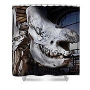 Paris Gallery Of Paleontology 3 Shower Curtain