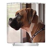 Parker The Boxer Shower Curtain