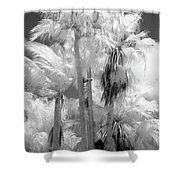Parking Lot Palms 1 1 Shower Curtain