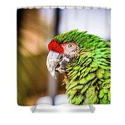 Parrot 2 Shower Curtain