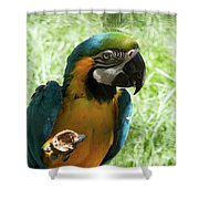 Parrot Eating Nut Shower Curtain