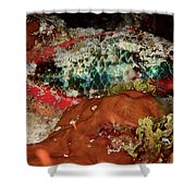Parrot Fish On Night Dive Shower Curtain