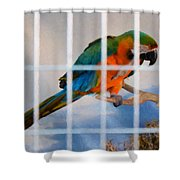 Parrot In A Cage Shower Curtain