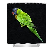 Parrot In Black Shower Curtain