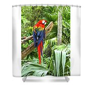 Parrot In Tropical Setting Shower Curtain