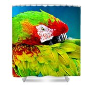 Parrot Time 1 Shower Curtain