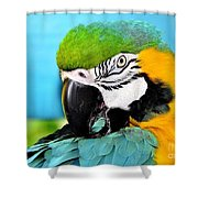 Parrot Time 3 Shower Curtain