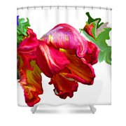 Parrot Tulip Shower Curtain