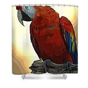 Parrot Watching Shower Curtain