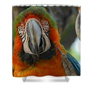 Parroting Information Shower Curtain