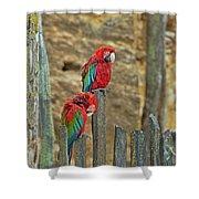 Parrots, Doue-la-fontaine Zoo, Loire, France Shower Curtain