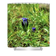 Parry's Mountain Gentian Shower Curtain