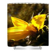Partial Shower Curtain