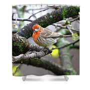Partial-migrator House Finch Shower Curtain