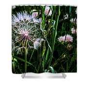 Partial Wish Shower Curtain