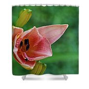 Partially Open Pink Lily Blossom Shower Curtain