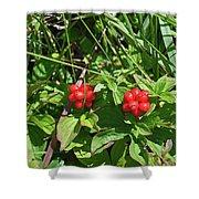 Partridgeberries Shower Curtain