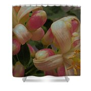 Party Blooms Shower Curtain
