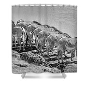 Party Of Eight  6973bw Shower Curtain