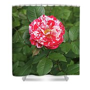 Party Rose #3 Shower Curtain